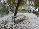 pleissing, schnee, snow, bäume, trees, garten, garden, bank