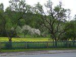 pleissing, apfelbäume, apple trees