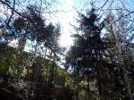 waldviertel, pleissing, garten, garden, fichten, spruce, wald, forest