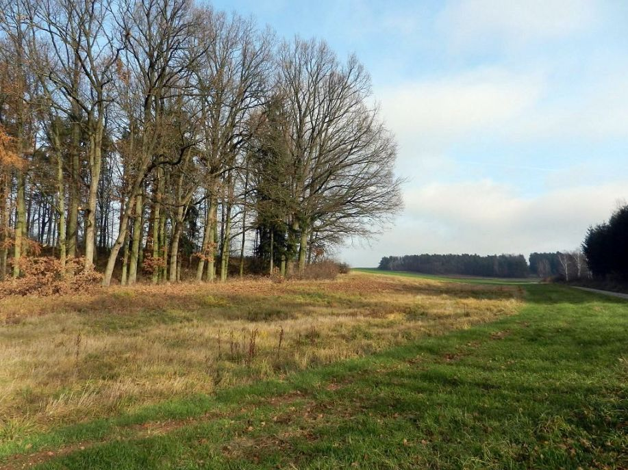 bäume, trees, arbres, landschaft, landscape, paysage, herbst, fall, autumn, automne, pleissing, retzerland, waldviertel, weinviertel,
