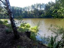 schilf, reed, roseau, canna palustre, see, lake, lac, lago, teich, pond, étang, laghetto, stagno, sommer, summer, été, estate,