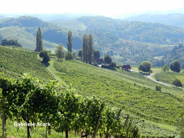 steiermark, styria, styrie, stiria, weinberg, vineyard, vignoble, vigna, vigneto, vina, weingarten, vineyard, vigne, vigna, vinedo,